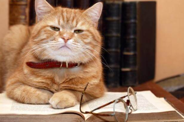 okuyan kedi