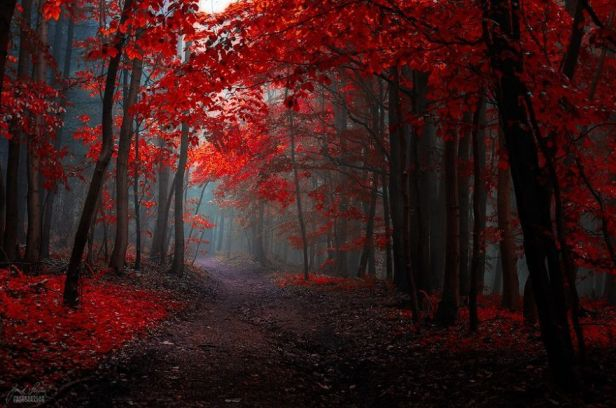 kırmızı orman - sonbahar